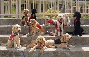 Service Dogs of Hawaii Fi-Do, Training Session, Working Dogs, Job, Group Photo