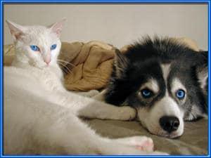 Accentuate BLUE