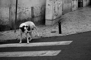 cão de estrada
