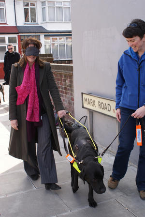On blindfolded walk with guide dog Zeus in Noel Park