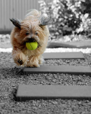 Fetch! [v2]